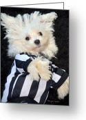 Sports Art Photo Greeting Cards - The Replacement Referee..... Greeting Card by Tanya Tanski