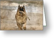 Dog Prints Digital Art Greeting Cards - The Retrieve Greeting Card by Angie McKenzie