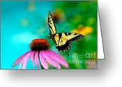 Swallow Tail Butterfly Greeting Cards - The Return Greeting Card by Lois Bryan