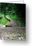 Nainital Photo Greeting Cards - The Road To Who Knows Where Greeting Card by Greg Palmer