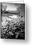 Flood Plain Greeting Cards - The Rocky South Platte River Greeting Card by David Patterson