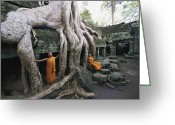 Clergy Greeting Cards - The Roots Of A Strangler Fig Creep Greeting Card by Paul Chesley
