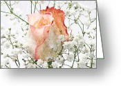 Bud Mixed Media Greeting Cards - The Rose Greeting Card by Andee Photography