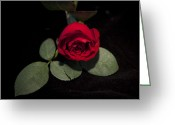 Charles Warren Greeting Cards - The Rose Greeting Card by Charles Warren