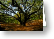 Florida - Usa Greeting Cards - The Sacred Oak Greeting Card by David Lee Thompson