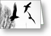 Odon Greeting Cards - The seagull flying  Greeting Card by Odon Czintos