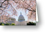 Capitol Greeting Cards - The Seasonal Experience Greeting Card by Mitch Cat