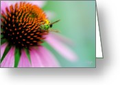 Echinacea Greeting Cards - The Seeker Greeting Card by Lois Bryan