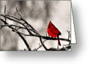 Red Bird Greeting Cards - The Sentinel Greeting Card by Kristin Elmquist