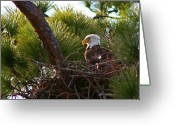 Eagle Prints Greeting Cards - The Sentinel Greeting Card by LaMarre Labadie