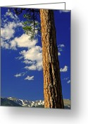 Ponderosa Greeting Cards - The Sentinel  Greeting Card by The Forests Edge Photography - Diane Sandoval