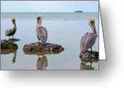 Pelicans Greeting Cards - The Sentinels Greeting Card by Kenneth Albin