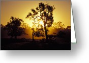 Devastation Greeting Cards - The Silhouettes Of Trees In A Golden Greeting Card by Jason Edwards