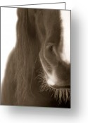 Pony Greeting Cards - The Soft Spot Greeting Card by Christine Hauber