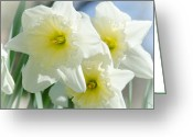 Christine Belt Greeting Cards - The Softnes of Spring Greeting Card by Christine Belt