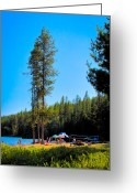 Sunbathing Trees Greeting Cards - The South Beach at Elkins Resort Greeting Card by David Patterson