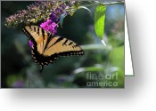 Stretched Canvas Greeting Cards - The Splendor of Nature Greeting Card by Gerlinde Keating - Keating Associates Inc