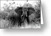 Uganda Greeting Cards - The Standoff Greeting Card by Bruce J Robinson