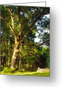 Country Scenes Photographs Greeting Cards - The Strong Tree Greeting Card by Robert Margetts