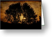 Frederico Borges Greeting Cards - The sun behind the tree Greeting Card by Frederico Borges