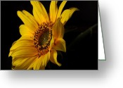 Flowers Photographs Greeting Cards - The Sun Flower  Greeting Card by Davor Sintic