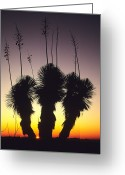 Cameron Greeting Cards - The Sun Sets Behind A Stand Of Yucca Greeting Card by Bill Hatcher