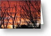 Trish Greeting Cards - The sun sets Greeting Card by Trish Clark