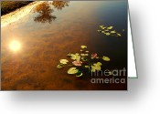Lotus Leaves Greeting Cards - The Sun Greeting Card by Susanne Van Hulst