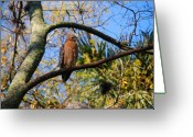 Buzzard Photo Greeting Cards - The supervisor Greeting Card by Susanne Van Hulst
