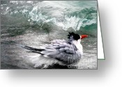 Tern Greeting Cards - The Tern Greeting Card by Doris Wood