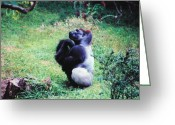Apes Greeting Cards - The Thinker Greeting Card by Jan Amiss Photography