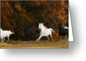 Running Horse Greeting Cards - The Thracian Mares Greeting Card by Ron  McGinnis