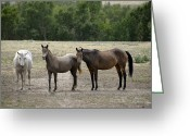 Wild Horse Greeting Cards - The Three Amigos Greeting Card by Ken Smith