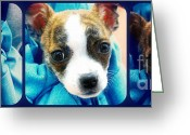Lapdog Greeting Cards - The Three Amigos Teacup Chihuahua Greeting Card by Peggy  Franz