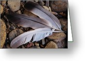 Black Elk Greeting Cards - The Three Feathers Greeting Card by Teri Schuster