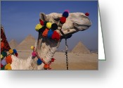 Graves And Tombs Greeting Cards - The Three Great Pyramids Of Giza Greeting Card by Stephen St. John