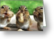 Furry Greeting Cards - The Three Stooges Greeting Card by Lori Deiter