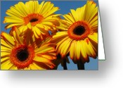 2012 Flower Calendar Greeting Cards - The Three Tenors Greeting Card by Juergen Roth