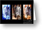 Vet Photo Greeting Cards - The Three Zebras black borders Greeting Card by Rebecca Margraf