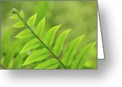 Fiddle Head Fern Greeting Cards - The tip of a Fern Greeting Card by JD Grimes