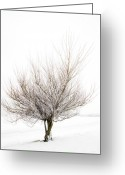Brunch Greeting Cards - The Tree Greeting Card by Svetlana Sewell