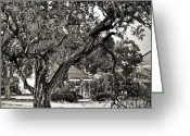 Tree Limbs Greeting Cards - The Tree Which Moves ... Greeting Card by Gwyn Newcombe
