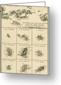 Old Map Drawings Greeting Cards - The Virgin Islands Greeting Card by Guillaume Raynal
