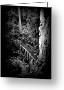 Oregon Wildlife Digital Art Greeting Cards - The Walk Above Greeting Card by Amanda Horne