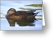 Wild-life Greeting Cards - The water bed Greeting Card by Robert Pearson