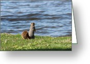 Mammal Photograph Greeting Cards - The Water Looks Cold Greeting Card by Stephanie Kripa