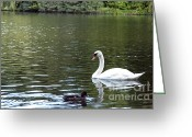 Nymphenburg Greeting Cards - The White Swan Greeting Card by Ivy Ho