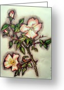 Botanical Drawings Greeting Cards - The Wild Rose Greeting Card by Linda Kemp