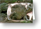Playful Wolves Greeting Cards - The Wild Wolve Group B Greeting Card by Debra     Vatalaro