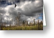 Barren Land Greeting Cards - The Wilderness Greeting Card by Gary Smith